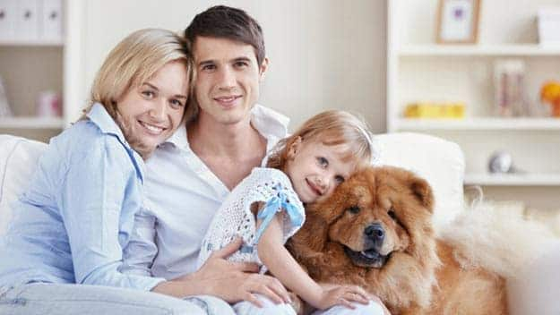 Wills & Trusts dog-young-family Direct Wills Gosport